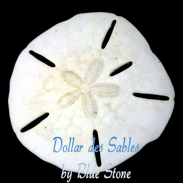 bijou Blue Stone argent dollar des sables. 925 silver sand dollar. dollar de arena en plata 925